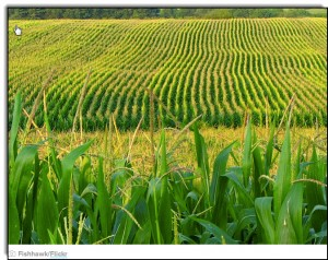 The Next Generation of GM Crops Has Arrived—And So Has the Controversy